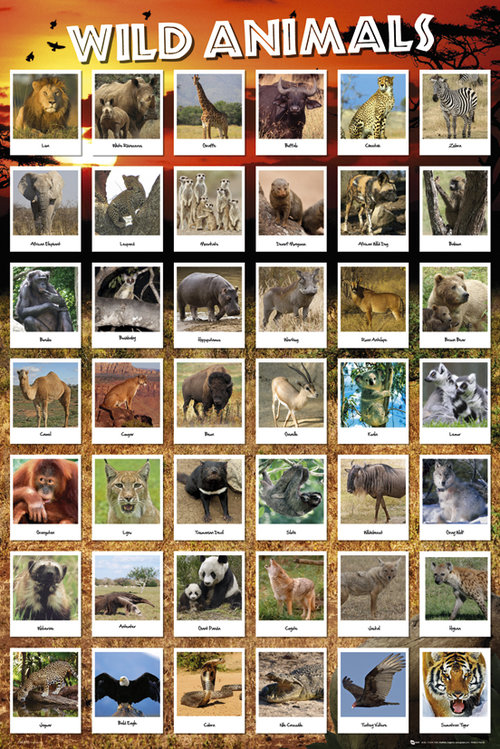 Poster Animaux 128794
